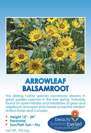 Arrowleaf Balsamroot tag with many yellow daisy-like flowers above gray-green leaves