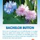 Bachelor Button seed packet.