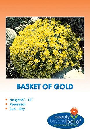 Basket-of-gold Alyssum