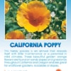 California Orange Poppy