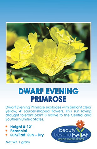 Tag for Dwarf Evening Primrose packet