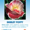 Mixed Shirley Poppy
