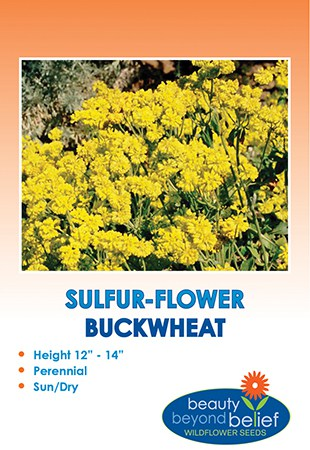 The front of the Sulfur-flower Buckwheat packet.