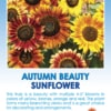Tag for Autumn Beauty Sunflower packet with flowers in shades of red and yellow