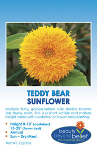 "Tag for Teddy Bear Sunflower packet with bushy foliage has multiple 3 - 6"" golden-yellow, double blooms"