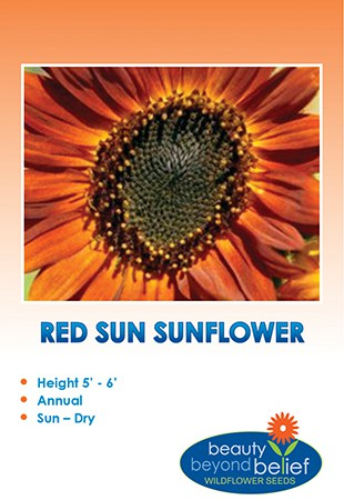 Red Sun Sunflower with deep orange petals