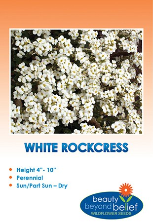 'Snow Cap' White Rockcress