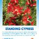 Tag for Standing Cypress Wildflower packet.