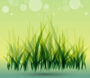 Grasses and Grass Mixes