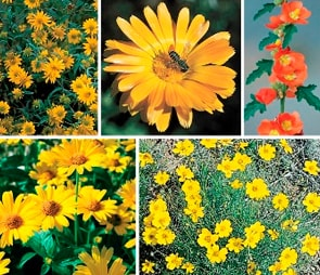 Montage of yellow and orange flowers for the 'sale' catagory selection.