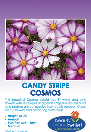 Candy Stripe Cosmos seed packet.