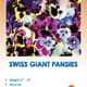 The front of the Swiss Giant Pansy packet.