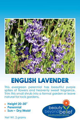 Photo of English Lavender packet.