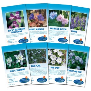 Fun Wildflower Collections