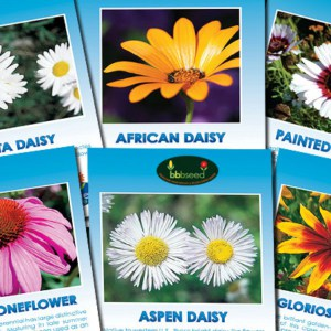 Crazy Daisy Collection of 6 wildflower species.