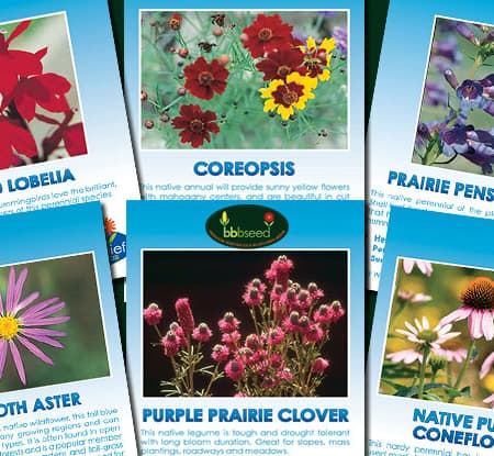 Great Plains Prairie Collection of 6 species of wildflowers.