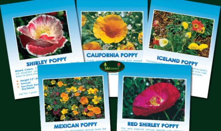 Perfect Poppy Collection of 5 Poppy species.