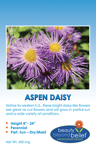 Aspen Daisy tag with purple shaggy, daisy-like flowers with yellow centers