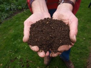 Hands full of rich soil.