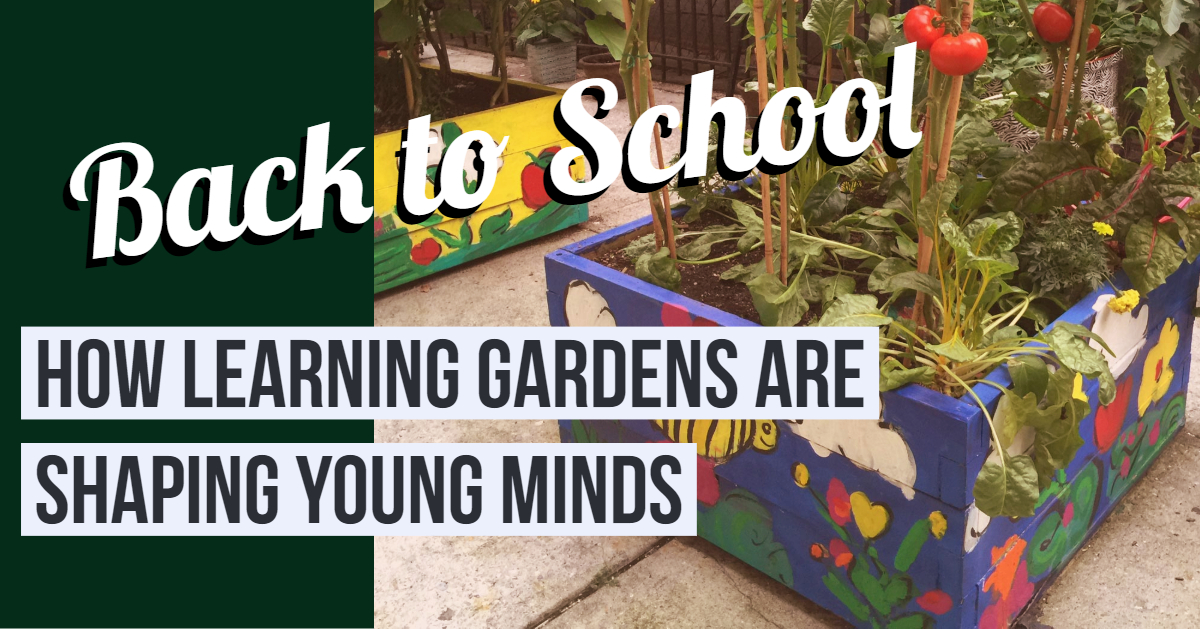 Back to School Learning Gardens.