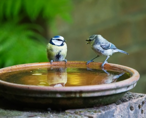 Photo of two birds on a birdbath.