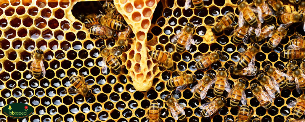 Honey bees on a honeycomb.